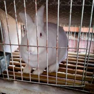 肉食兔养殖场