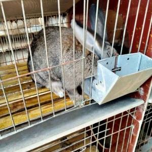 滁州肉兔養殖場建設價格優惠