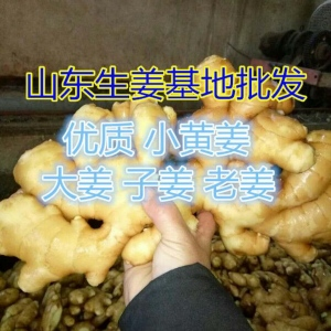 廣西姜種植