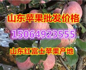 山东省红富士苹果产地价格