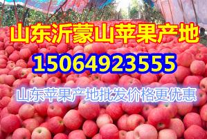 今年冷库红富士苹果产地价格行情