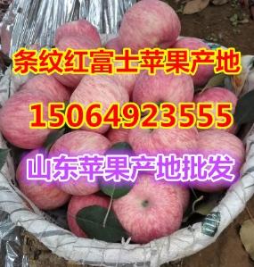 条纹红富士苹果产地批发