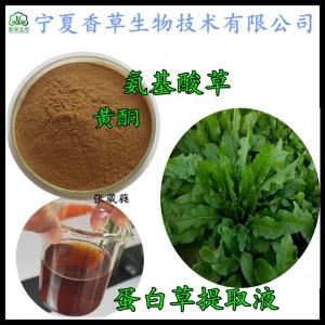 食叶草黄酮  现货批发 食叶草汁粉 蛋白草根富含黄酮