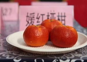 杭州嫒红柑橘苗,嫒红柑橘苗大型苗圃,杭州无籽椪柑苗