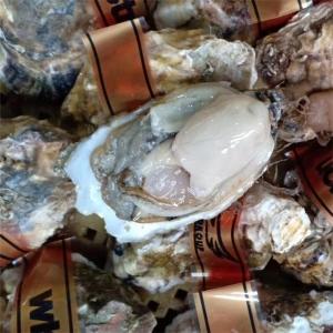 山東乳山生蠔牡蠣批發威海產地發貨養殖戶直供