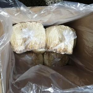 黃金針菇(40斤裝)