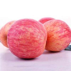 紅富士蘋果行情
