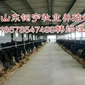 阜陽肉驢苗 肉驢價格 驢苗價格肉驢養殖場