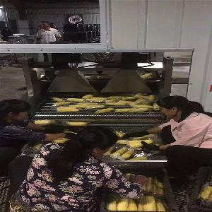 连续式真空糯玉米生产流水线设备