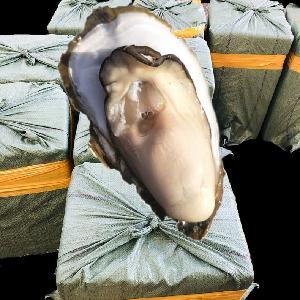 湛江生蠔批發3兩中蠔養殖戶產地發貨量大優惠