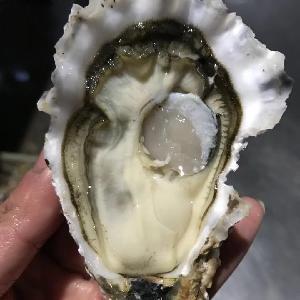 山东生蚝产地批发鲜活牡蛎价位