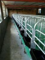 2.2*6.5  出售带底复合单体栏保胎母猪床养猪设备厂家直销