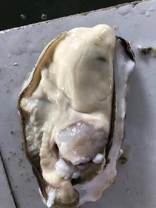 乳山三倍体牡蛎4-5两/个